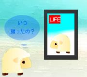 hitsuji_SECRET-LIFE-OF-WALT.jpg